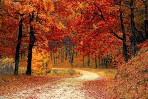 fall-1072821_1920_0.jpg